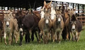 Donkeys abandoned