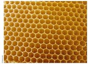 Stolen Beehive