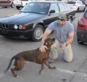 Video of Dog Welcoming Soldier Home Goes Viral