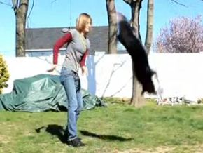 Geronimo the double Dutch jumping dog