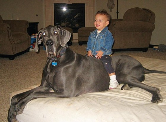Tallest dog ever - photo#20