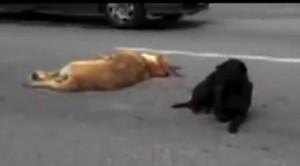 loyalty of a black Labrador retriever