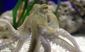 South Korean arrested over girlfriend's odd octopus death