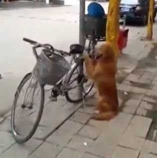 Lili the Bike Hugging Dog