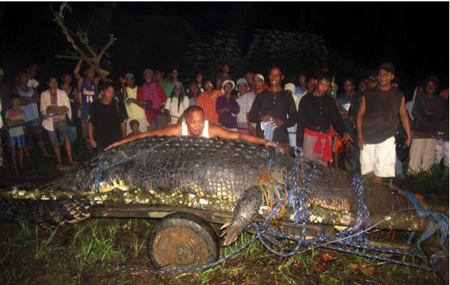 World's Largest Crocodile in Captivity