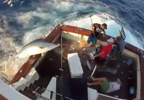 Giant marlin jumps onto fishing boat