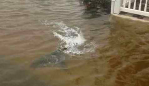 Hurricane Sandy floods New Jersey; Shark found in a front yard (Photos)