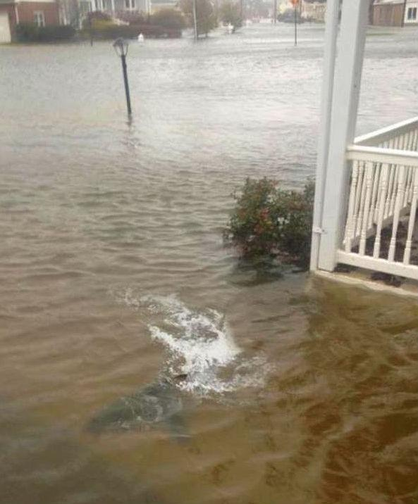 Shark Found In Front Yard As Hurricane Sandy Hammered New Jersey