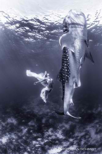 Extraordinary fashion shoot with huge whale sharks