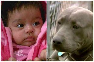 baby hero dog