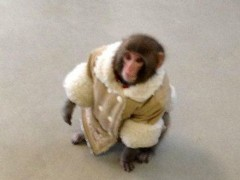 Creature Novelty: Coat-Wearing Monkey Found in Ikea Store (Photos)