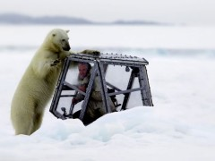 Featured Video: Filmmaker's Scary and Close Encounter with Hungry Polar Bear