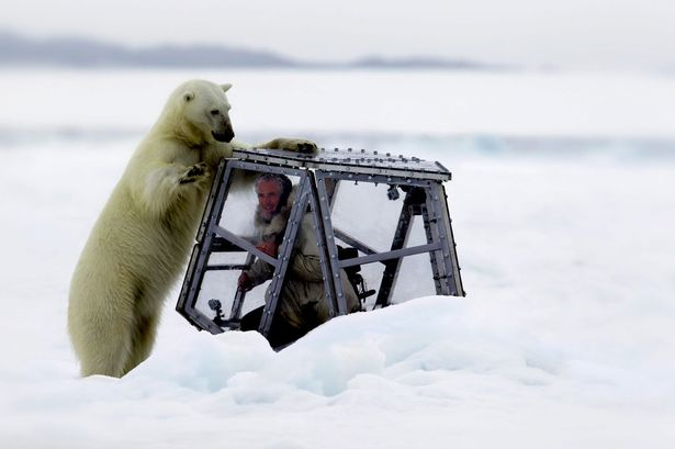 wildlife filmmaker came face-to-face with hungry polar bear